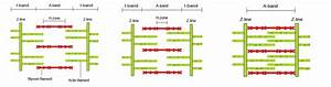 Sliding Filament Theory Diagram Sliding Filament Theory ...