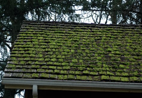 Care And Maintenance Of Wood Shingle And Shake Roofs