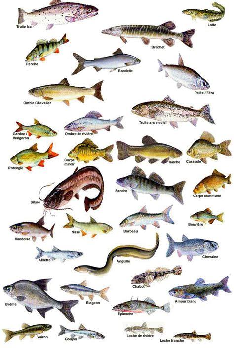 poissons d avril la marquise de carabas
