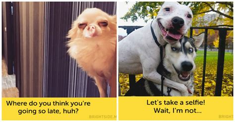 Funny Dog Face Expressions
