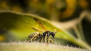 Was Tun Gegen Wespen : wespennest im rolladenkasten wespennest im rollladenkasten was tun vorbeugung wespen im ~ Whattoseeinmadrid.com Haus und Dekorationen