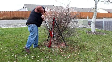 Removing Trees From Backyard by How To Remove Shrubs The Easy Way