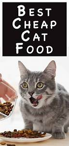 A Complete Guide To The Best Cheap Cat Food