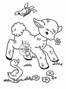 A Sheep Animal