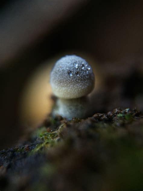 photo gallery macro mushrooms yellow elanor