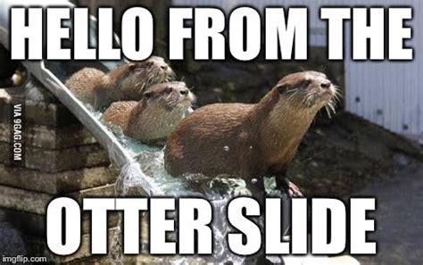 adele   screwed    otter  image