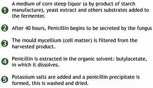 Biotechnology  Screening Procedures  Fermentation And The