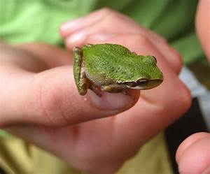 What Do Tree Frogs Eat