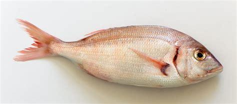 cuisiner un poisson pagre au fenouil cuisine à l 39 ouest
