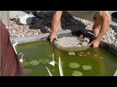care  lilies planting instructions  water lily pond