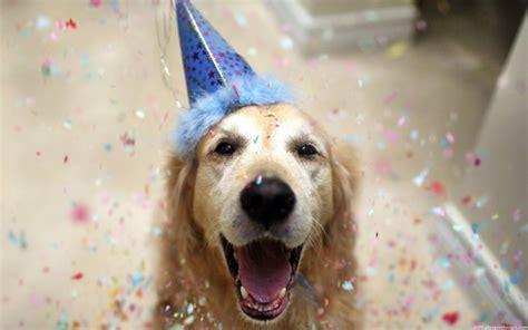 birthday wishes  dogs wishesgreeting