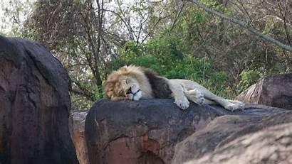 Animal Kingdom Disney Hidden Park Theme Safari