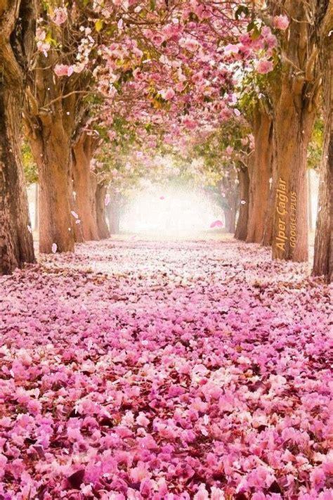 wallpapers de rosas animadas fondos de pantalla