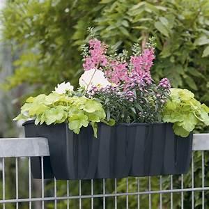 Weidenruten Zum Pflanzen Kaufen : crown gel nder blumenkasten anthrazit online kaufen bei ~ Lizthompson.info Haus und Dekorationen