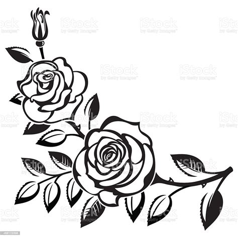 black branch  roses drawing  white background stock