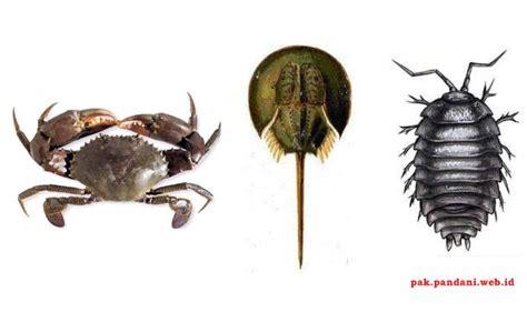 Perhatikan gambar kelompok hewan invertebrata berikut ...
