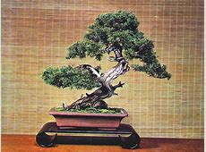 Bonsai Wallpaper 009, Free Desktop Wallpapers, Cool Wallpapers