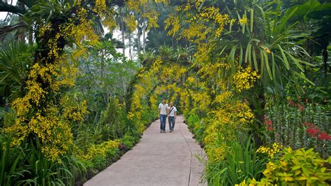 Botanischer Garten Berlin Picknick by Singapore Botanic Gardens Pictures View Photos Images