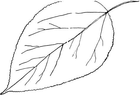 images  leaf outline printable template leaves clip