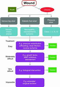 Flow Diagram Of Chronic Wound Management  Skin Lesions