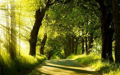 Forest Road Stunning Desktop Nature Trees Wallpapers