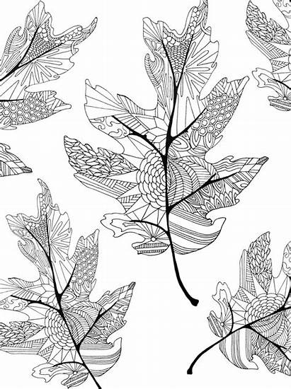 Coloring Fall Pages Adults Leaves