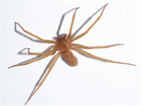 Spiders | Pest Control | Parkersburg, Marietta, Athens