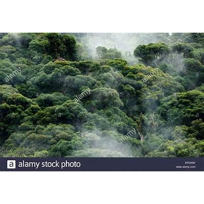 Brazilian Atlantic Forest Stock Photos &