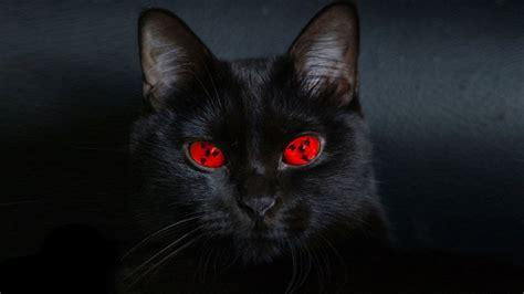 top  cele mai periculoase rase de pisici youtube