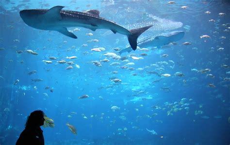 save money   georgia aquarium  atlanta
