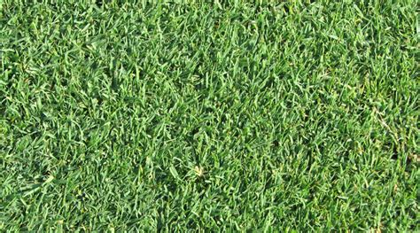 proper care   grass type weed   lawn care