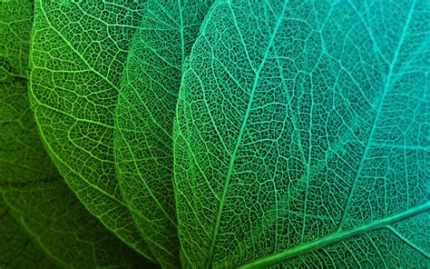 Abstract Green Leaf Wallpaper by Green Leaves Hd Wallpapers Hd Wallpapers Id 23043