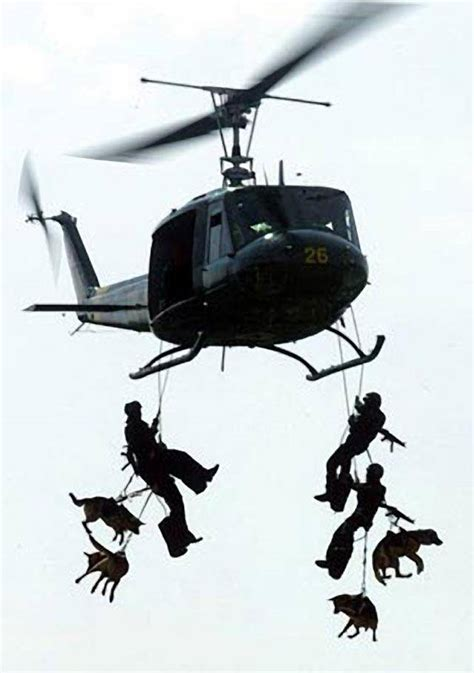 The Dogs of the Navy SEALs | Navy SEALs