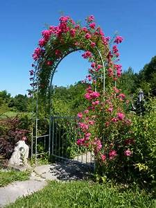 Rosen Für Rosenbogen : rosenbogen aus holz oder metall bauen und bepflanzen ~ Orissabook.com Haus und Dekorationen