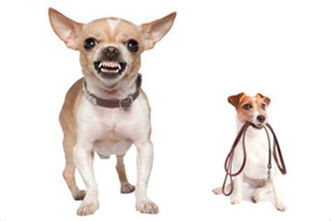 nova official website  meaning  dog barks