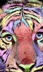Pin by Daniel Trainor on I Love Cats | Pet tiger, White ...