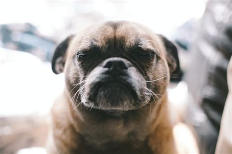 Funny Dog Face Photo - HDWallpaperFX