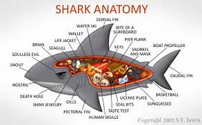 Shark Anatomy  Shark Anatomy