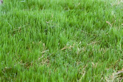 Tips On How To Grow Bermuda Grass