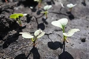 Quel Legume Planter En Septembre : que faire au potager en septembre les conseils pour ~ Melissatoandfro.com Idées de Décoration
