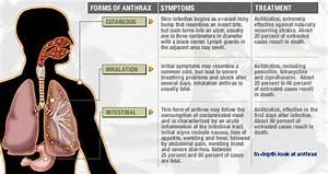 Anthrax  Ulcer Cutaneous anthrax