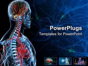 powerpoint template the anatomy of a human with bluish With anatomy ppt templates free download