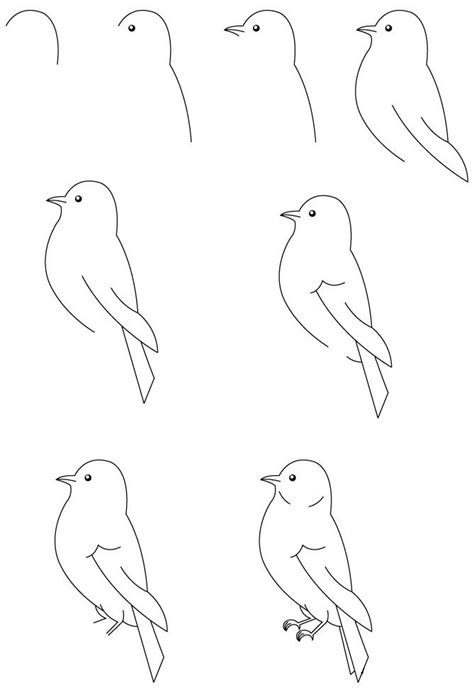 draw  bird bird art pinterest   draw