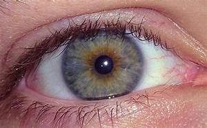 File:Hazel Eyes, Caucasian Male, Age 23.jpg - Wikimedia ...