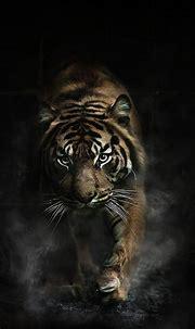 صور النمر الأسود والأبيض , خلفيات النمر للايفون , 2021 ...