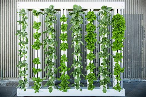 photo wall hanging ideas will vertical farming continue to grow or has it hit the