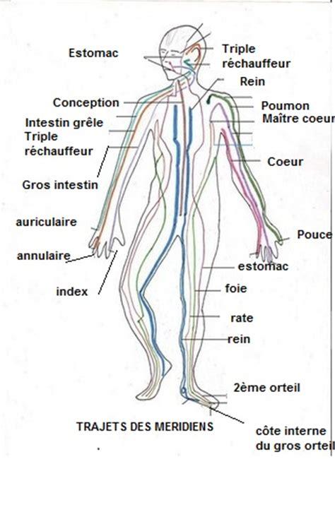 meridien du corps humain pin les meridiens on