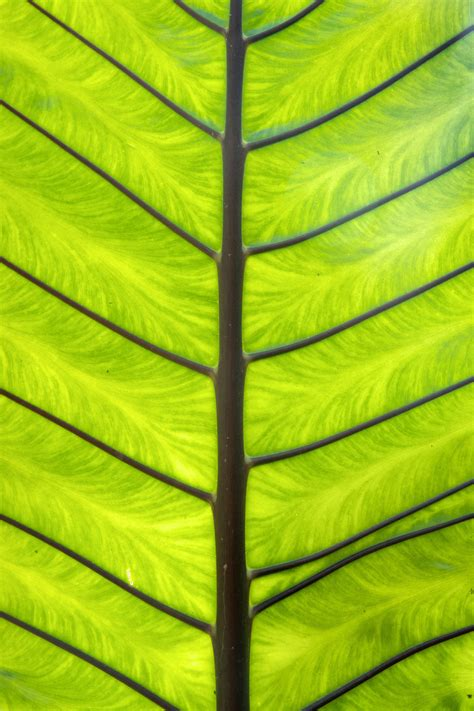 Nice free green palm leaf texture image