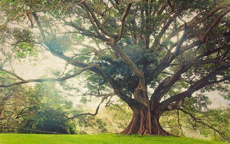 nature, Landscape, Huge, Trees, Ancient, Grass, Sunlight ...