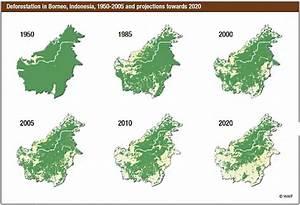 Deforestation in Borneo - Ecoclimax